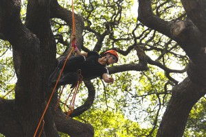 2014 Women's Tree Climbing Champion, Jamilee Kempton, during the Masters Challenge. Photo by David Leonard.